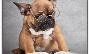 Consejos Para Aprobar el Reading del PET de Cambridge